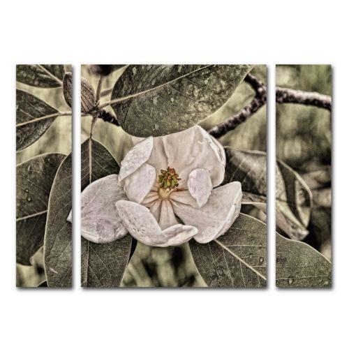 "Trademark Fine Art ""White Magnolia"" Wall Art 3-piece Set"