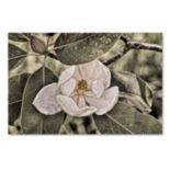 "Trademark Fine Art ""White Magnolia"" Canvas Wall Art"