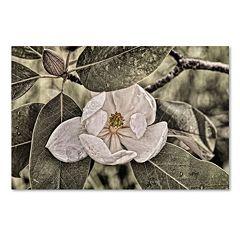 Trademark Fine Art 'White Magnolia' Canvas Wall Art