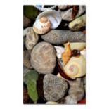 "Trademark Fine Art ""Petoskey Stones ll"" Canvas Wall Art"