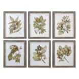 Seedlings Leaves Framed Wall Art 6-piece Set