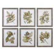 Uttermost Seedlings Leaves Framed Wall Art 6-piece Set