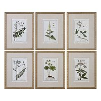 Green Floral Botanical Study Framed Wall Art 6 pc Set