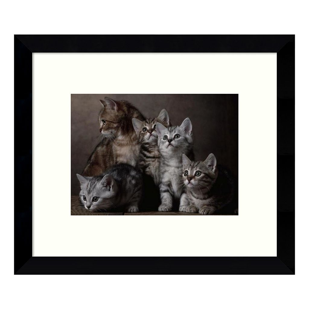 European Shorthair Kittens Framed Wall Art