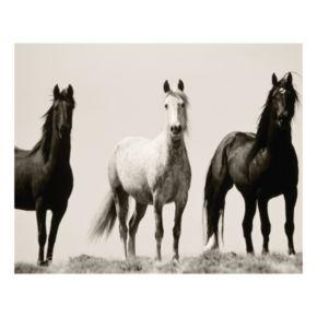 Wild Stallions Canvas Wall Art