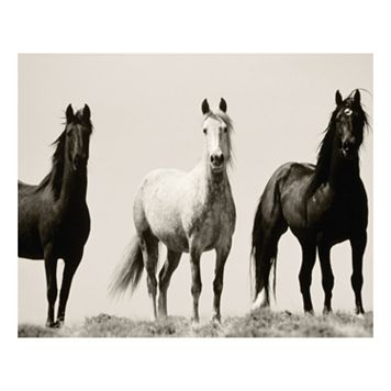 Wild Stallions Canvas Wall Art