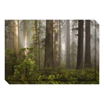 Morning Light Forest Canvas Wall Art
