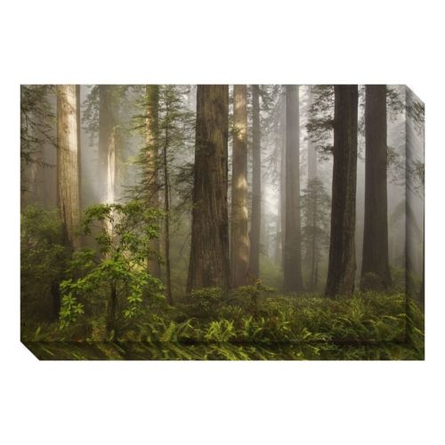 Morning Light Forest Canvas Wall Art