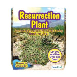 Dunecraft Resurrection Plant