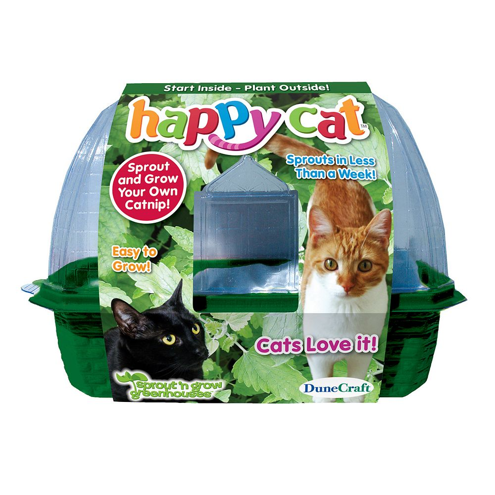 dunecraft happy cat plant kit