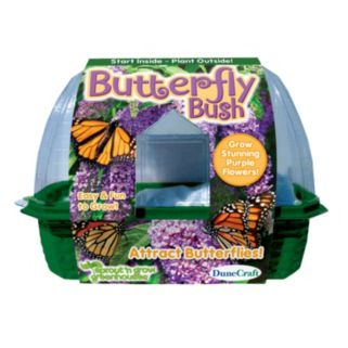 Dunecraft Sprout 'n Grow Greenhouse Butterfly Bush