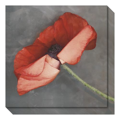 Amanti Art Rouge Poppy Canvas Wall Art
