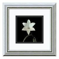 Amanti Art Flower Series VI Print Framed Wall Art