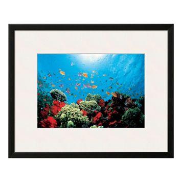 Art.com Aquarium Framed Wall Art