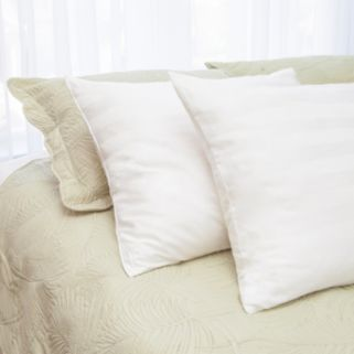 Natural Latex Plus 2-pack Pillow