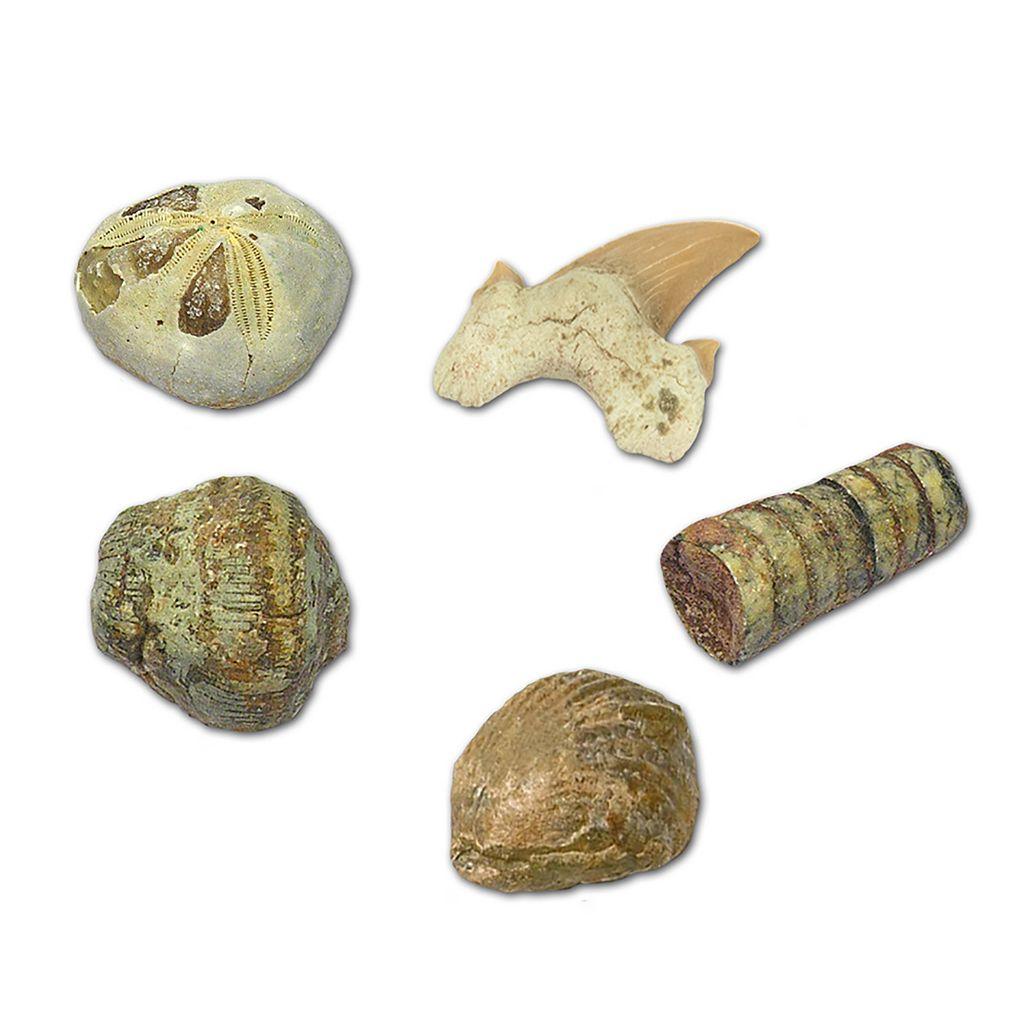 Geoworld Dr. Steve Hunters Fossils Paleo Lab