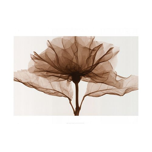 Art.com A Rose II Wall Art Print