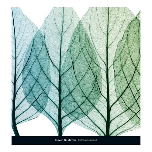 Art.com Celosia Leaves I Wall Art Print