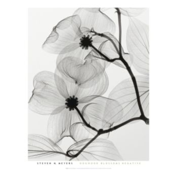 Art.com Dogwood Blossoms Positive Framed Wall Art