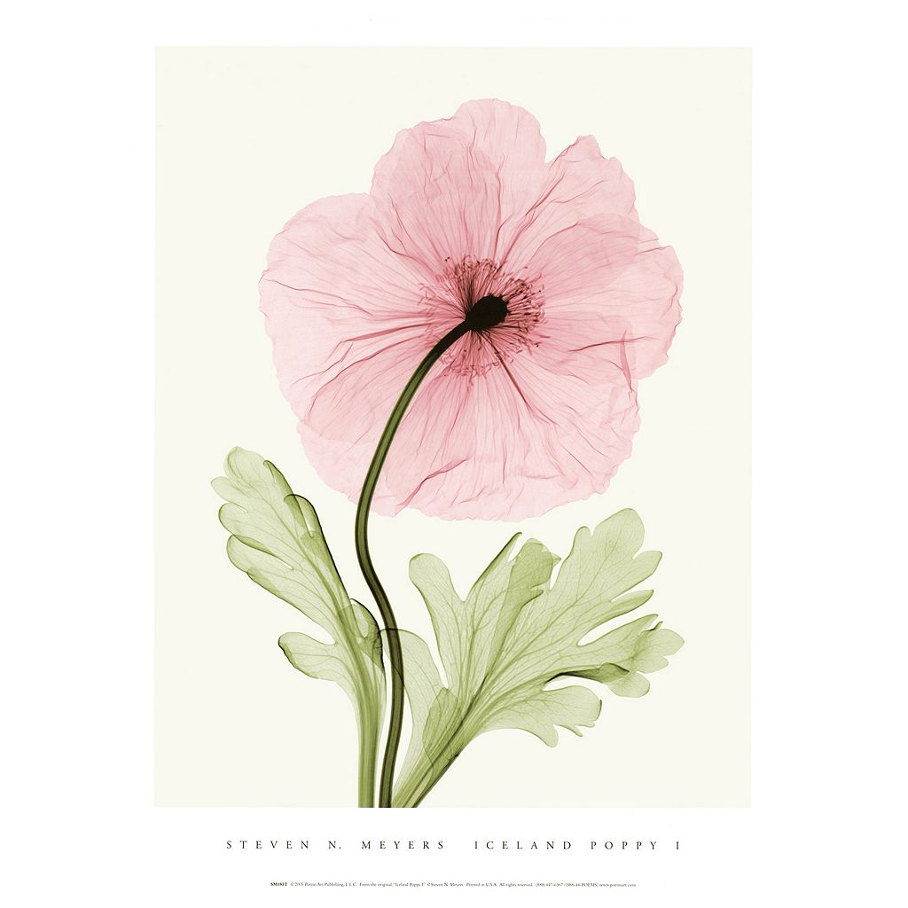 Art.com Iceland Poppy I Wall Art Print