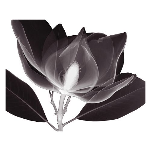Art.com Magnolia Wall Art Print