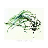 Art.com Wind Wall Art Print