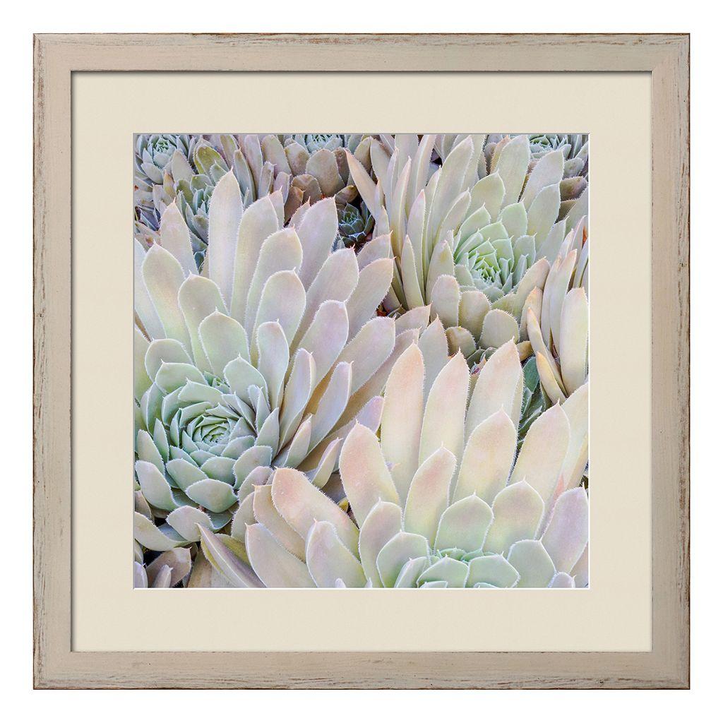 Art.com Succulents I Framed Wall Art