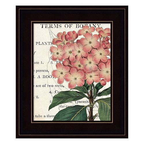 Bicolor Phlox Botany Framed Wall Art