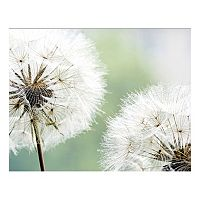 Dandelion Duo Canvas Wall Art