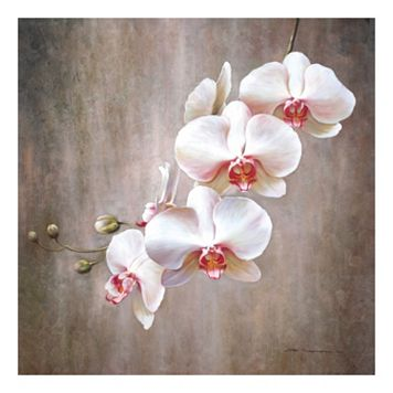 Orchid Bloom Canvas Wall Art