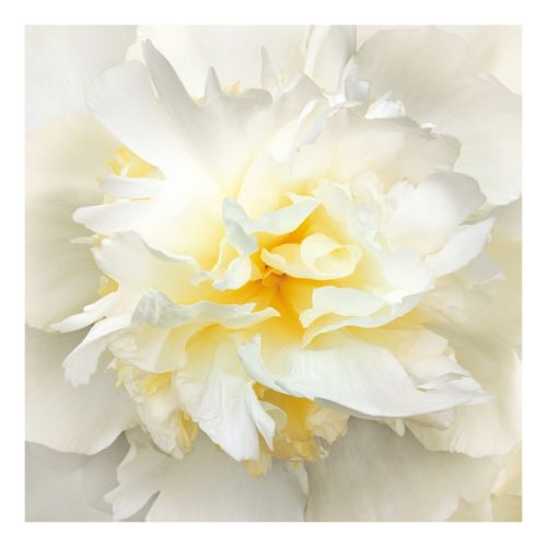 Sunrise Peony Canvas Wall Art