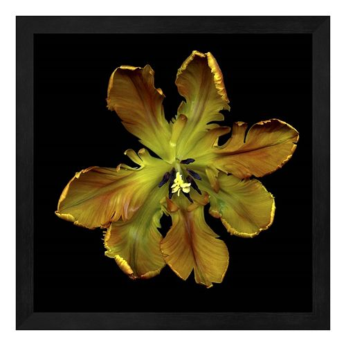 Parrot Tulip 1 Framed Wall Art