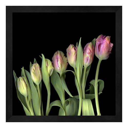 Parrot Tulips 3 Framed Wall Art