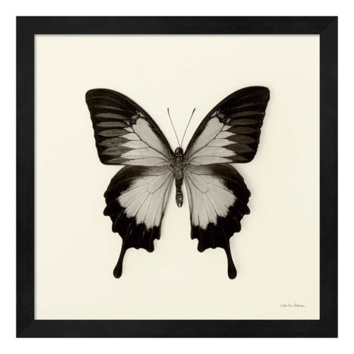 Butterfly III Framed Wall Art