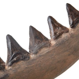 Madison Park Artificial Shark Jaw Wall Decor