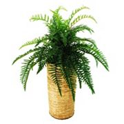 Designs by Lauren Artificial River Fern Plant