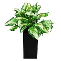 Designs by Lauren Artificial Hosta Plant