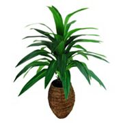Designs by Lauren Artificial Yucca Palm