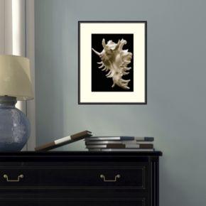 Amanti Art Murex Framed Wall Art