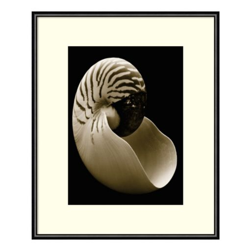 Amanti Art Nautilus Framed Wall Art