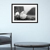 Amanti Art Rodeo Beach Shells 1 Framed Wall Art