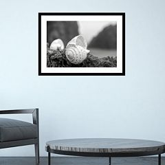 Amanti Art Rodeo Beach Shells 1 Framed Wall Art