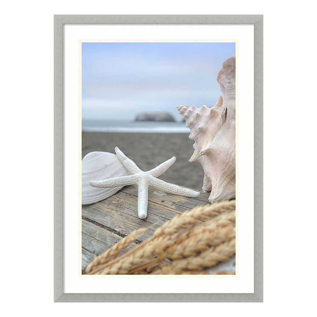 Amanti Art Rodeo Beach Shells 12 Framed Wall Art