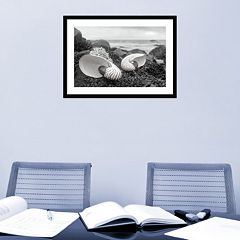 Amanti Art Rodeo Beach Shells 2 Framed Wall Art