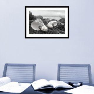 Amanti Art Rodeo Beach Shells 2 Framed Wall Art