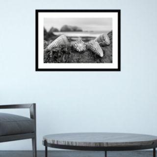 Amanti Art Rodeo Beach Shells 3 Framed Wall Art