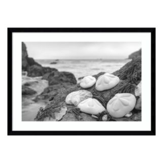 Amanti Art Rodeo Beach Shells 4 Framed Wall Art
