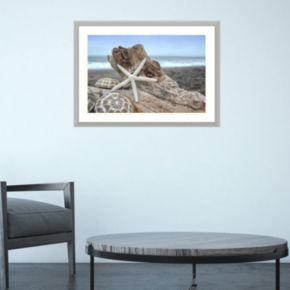 Amanti Art Rodeo Beach Shells 6 Framed Wall Art