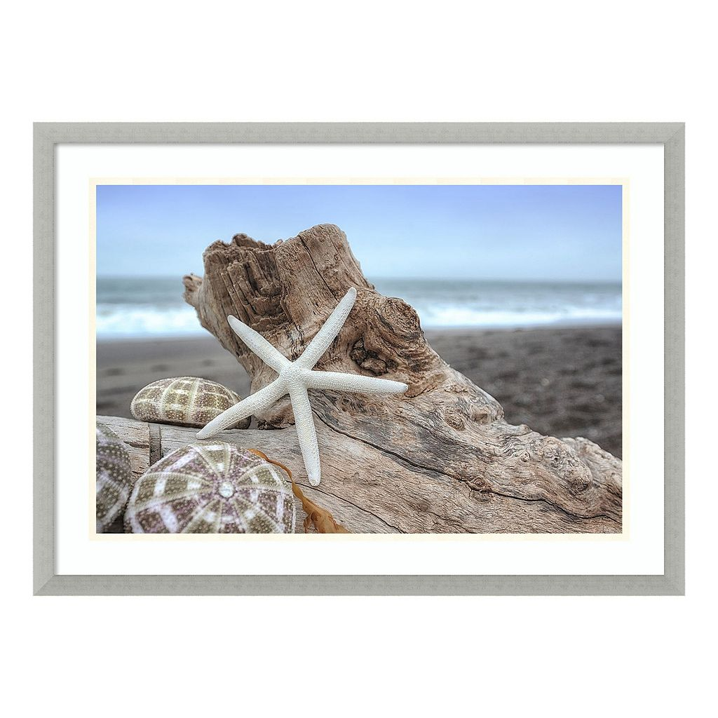 Amanti Art Rodeo Beach Shells 6 Framed Wall Art