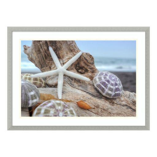 Amanti Art Rodeo Beach Shells 7 Framed Wall Art